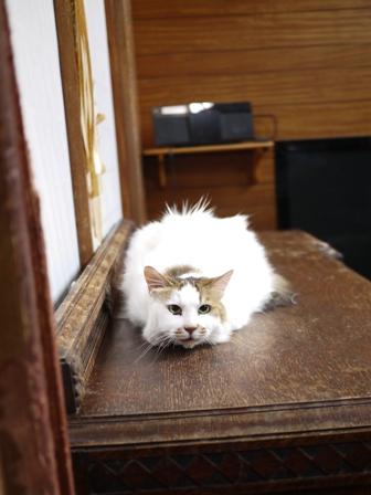 猫のお友だち ハナちゃんホビちゃんエムくんライオンちゃんガブくんハルちゃんダイヤちゃんフーちゃん編。_a0143140_21134476.jpg
