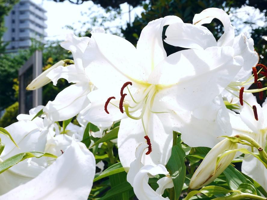 街なか散歩_b0093754_20132452.jpg
