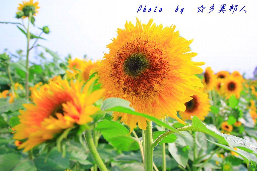 d0274760_1847845.jpg