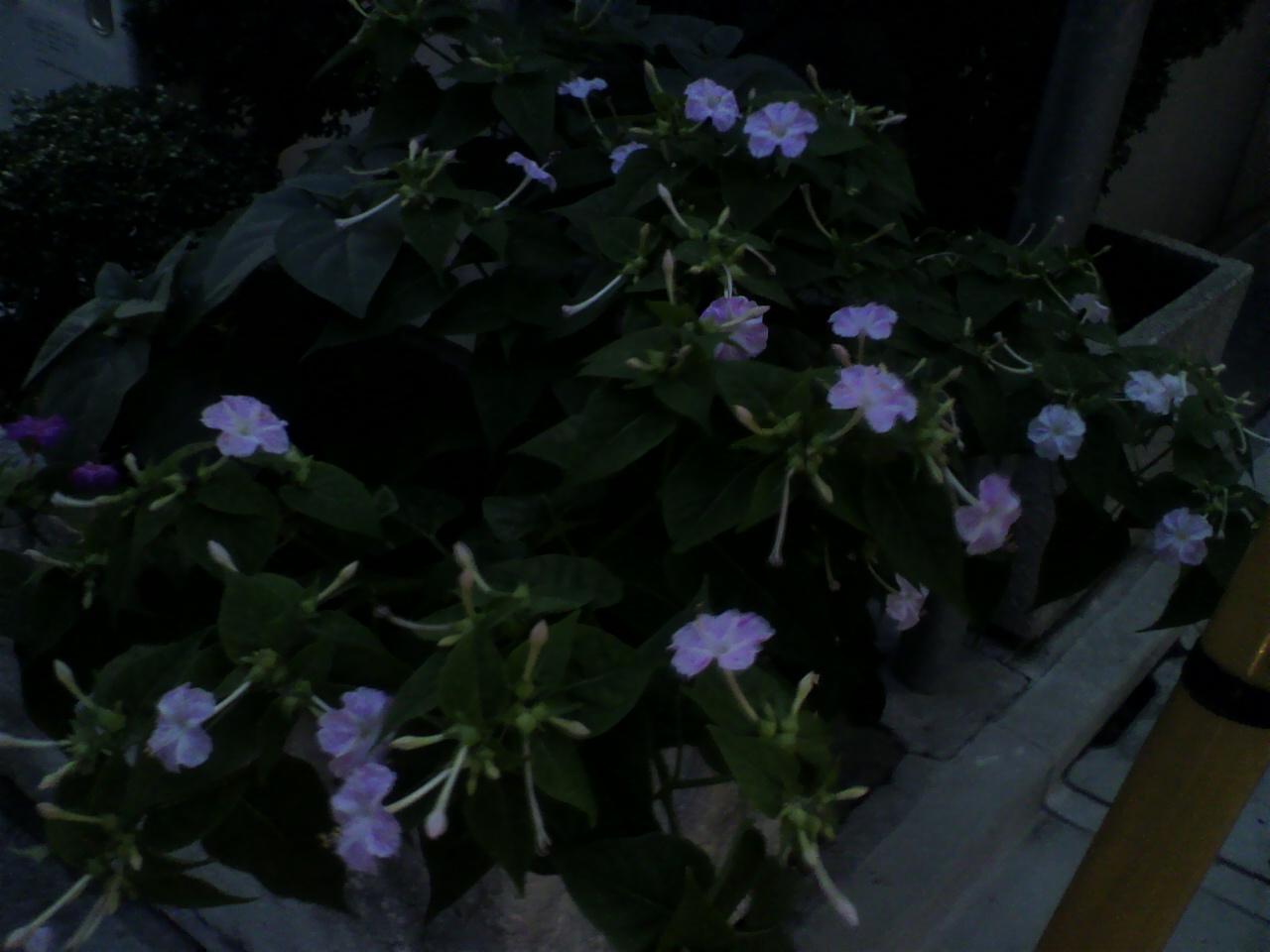 今年も夏花の………。_d0062076_1719261.jpg