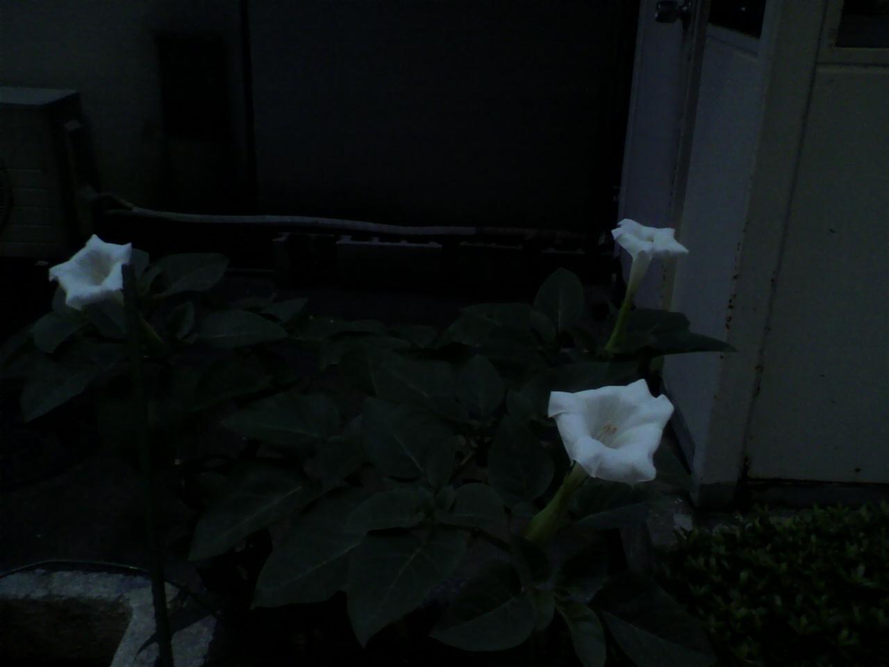 今年も夏花の………。_d0062076_17202416.jpg