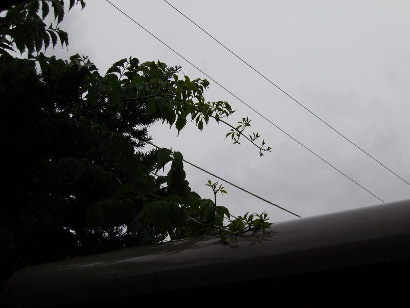 いつのまにかノウゼンカズラが咲いていた_c0025115_18352542.jpg