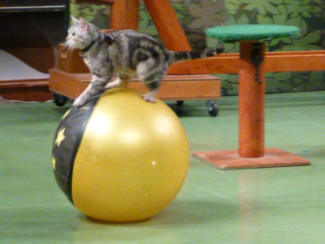 那須旅行 那須どうぶつ王国-3 【The Cats】_e0237625_0235411.jpg