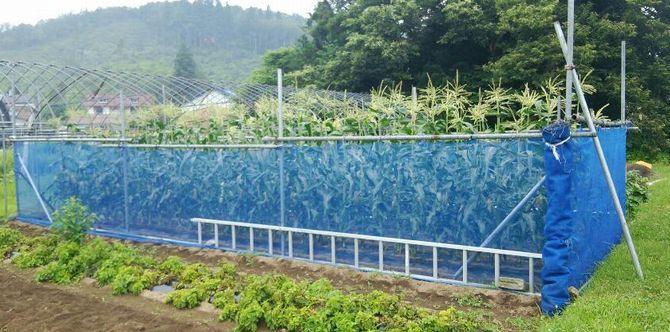 家庭菜園_f0081443_82751.jpg