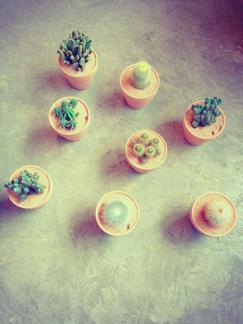 今週の鉢物さん _b0209477_1754416.jpg