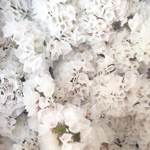 """スターチス\""""スノーホワイト\"""" from Instagram flora flora photo diary_a0115684_198733.jpg"""