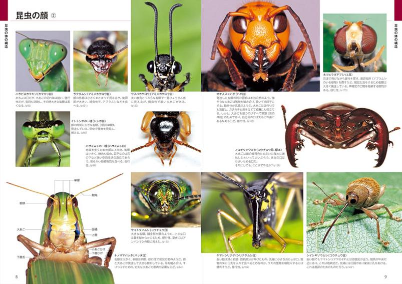 「昆虫博士入門」と自然観察大学の関係_d0163696_17422465.jpg
