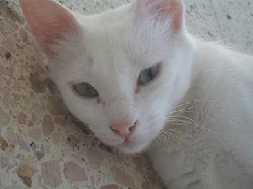 実家にて② 猫たち_f0253303_1747386.jpg