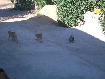 実家にて② 猫たち_f0253303_17505455.jpg