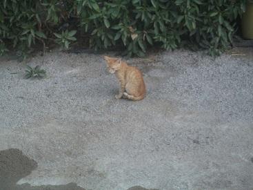 実家にて② 猫たち_f0253303_17543338.jpg