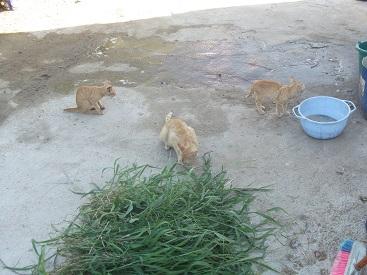 実家にて② 猫たち_f0253303_17553317.jpg