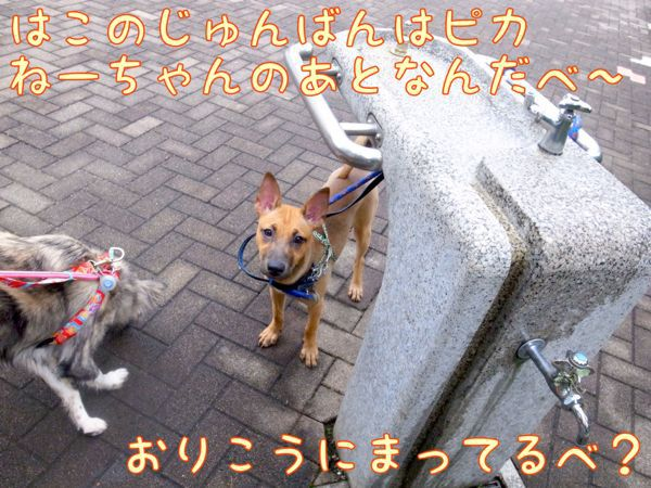 f0329311_1005094.jpg