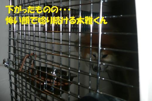 f0121712_15342087.jpg