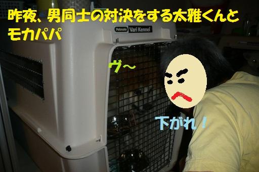 f0121712_1534351.jpg