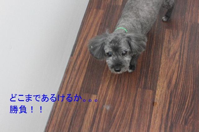 b0130018_035467.jpg