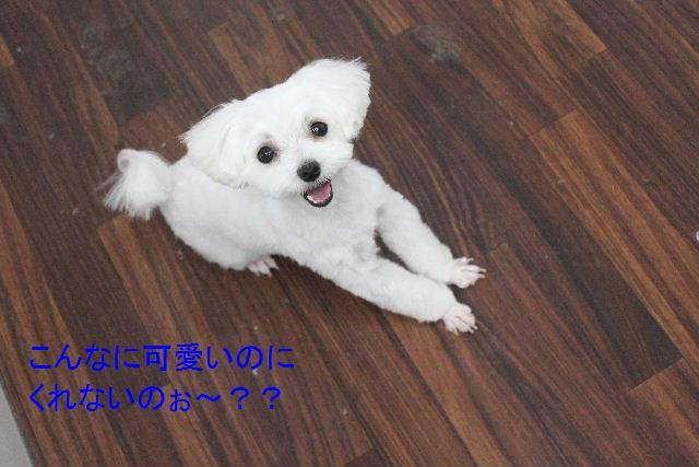 大失敗!!_b0130018_040274.jpg