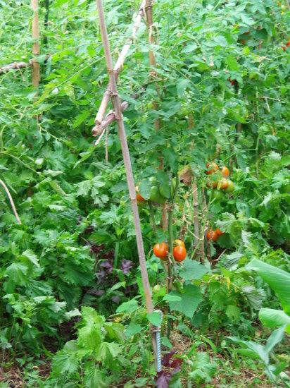 オーガニックな「ミントシロップ」作りと、自然農の「サラダごぼう」のサイドメニューで。_a0125419_19534585.jpg