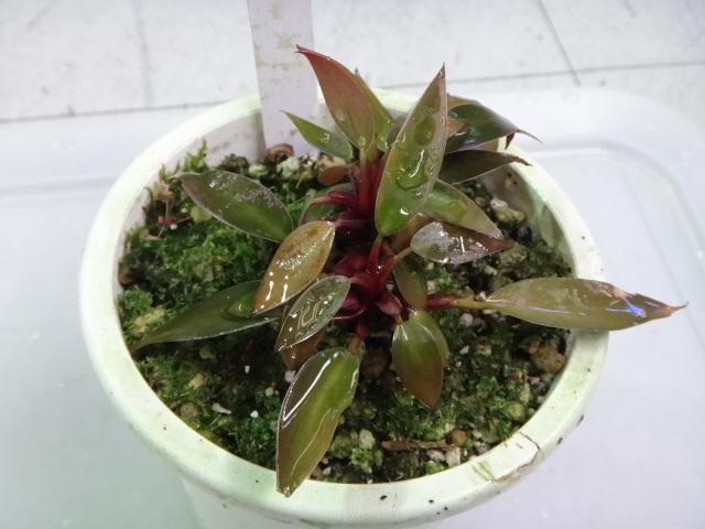 140724 熱帯魚・水草・観葉植物_f0189122_13155667.jpg