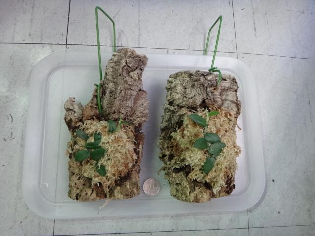140724 熱帯魚・水草・観葉植物_f0189122_13194550.jpg