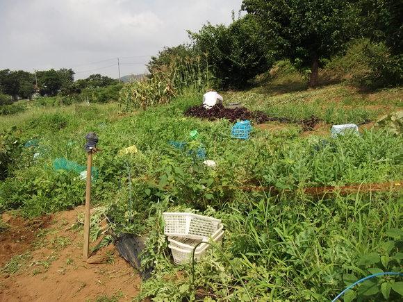 畑それとも草原?...少し耕しました。_b0137932_0265839.jpg