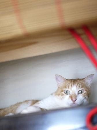 猫のお友だち みるくくん編。_a0143140_22523799.jpg
