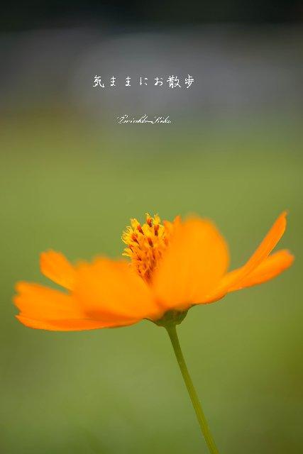 f0158043_221961.jpg
