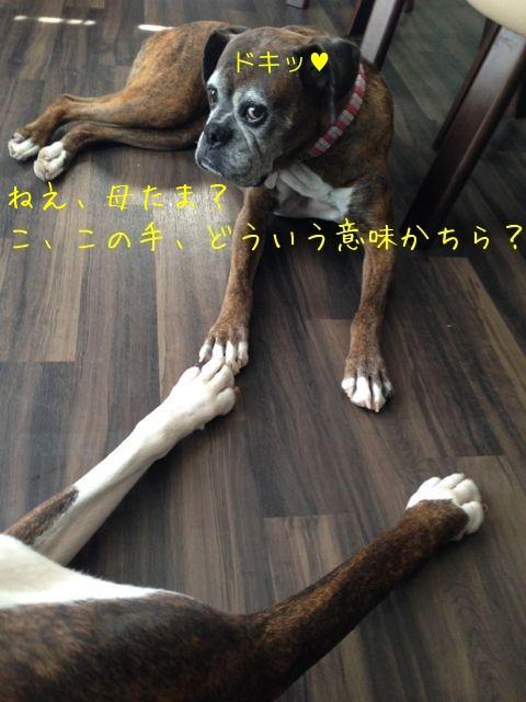 f0177261_1127638.jpg