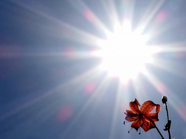 大暑の対処法_a0148866_1857533.jpg