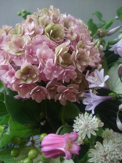 オークリーフ(青木園芸の紫陽花)_f0049672_17453142.jpg
