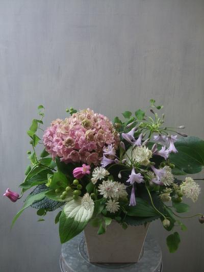 オークリーフ(青木園芸の紫陽花)_f0049672_17455548.jpg