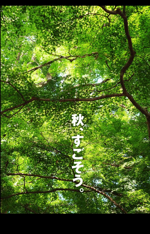 b0315480_21520139.jpg