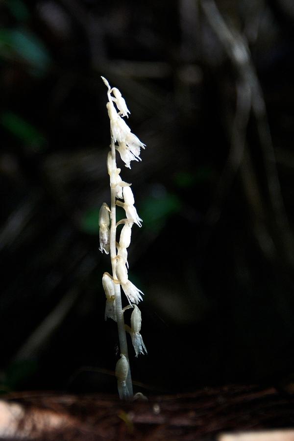 エビを咥えてホバ/育ったカルガモの雛/タシロラン/月と昴/ヤマユリ_b0024798_10373254.jpg