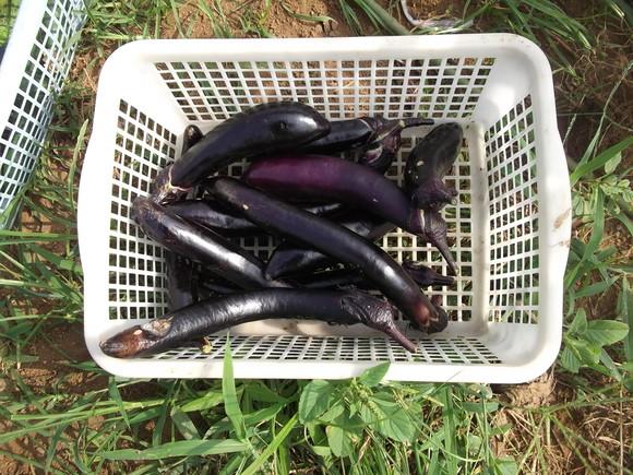 暑いです...夏野菜は!_b0137932_2291510.jpg