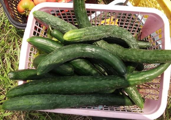 暑いです...夏野菜は!_b0137932_2295346.jpg