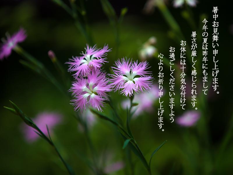 d0195335_19432055.jpg