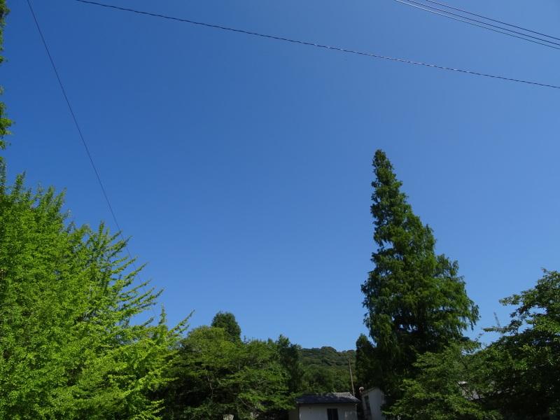 「バンブーハウス」で7月度運営委員会 in  孝子の森_c0108460_20593336.jpg