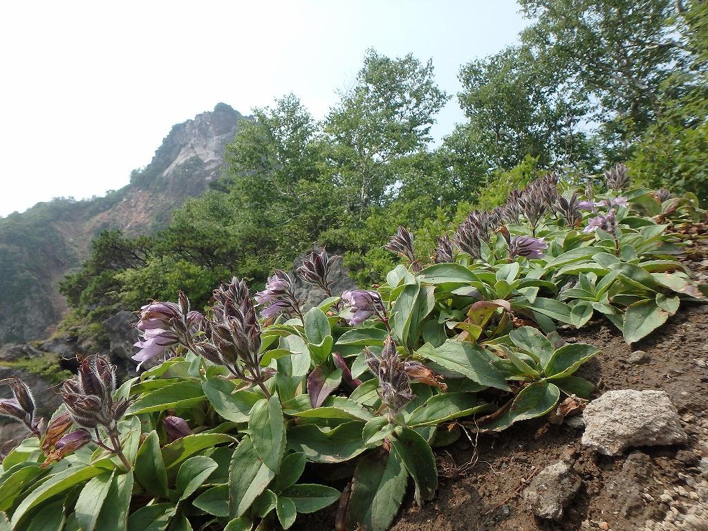 地震後の恵庭岳、再び 7月25日-速報版-_f0138096_15575562.jpg
