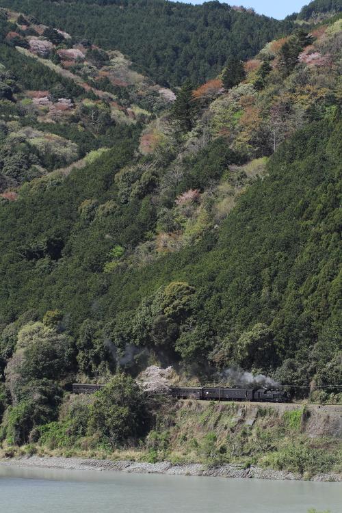 猛暑の日に桜と緑が鮮やかだった頃を思う - 2014年桜・大井川 -  _b0190710_23421010.jpg