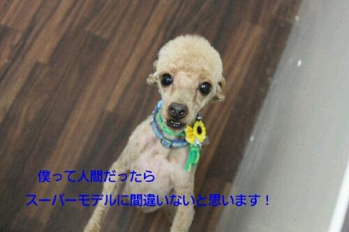昨日から_b0130018_214465.jpg