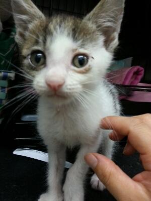 猫ちゃん♪_b0249332_1653056.jpg