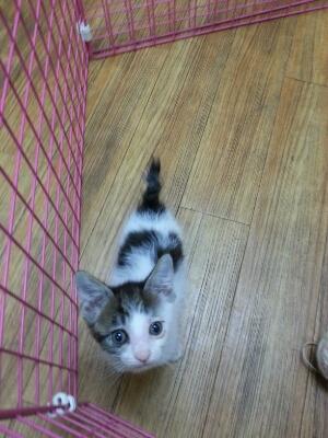 猫ちゃん♪_b0249332_1654084.jpg