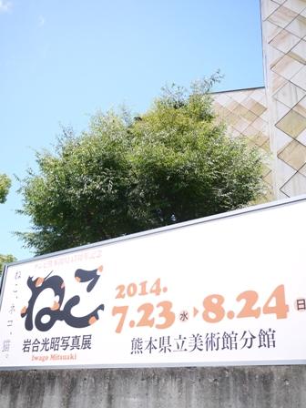 岩合光昭写真展ねこ 熊本県立美術館分館 熊本市中央区千葉城町。_a0143140_2036235.jpg