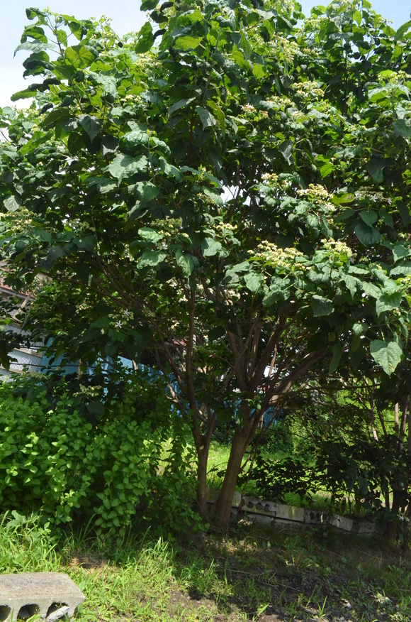 暑い夏!_b0207642_1292687.jpg