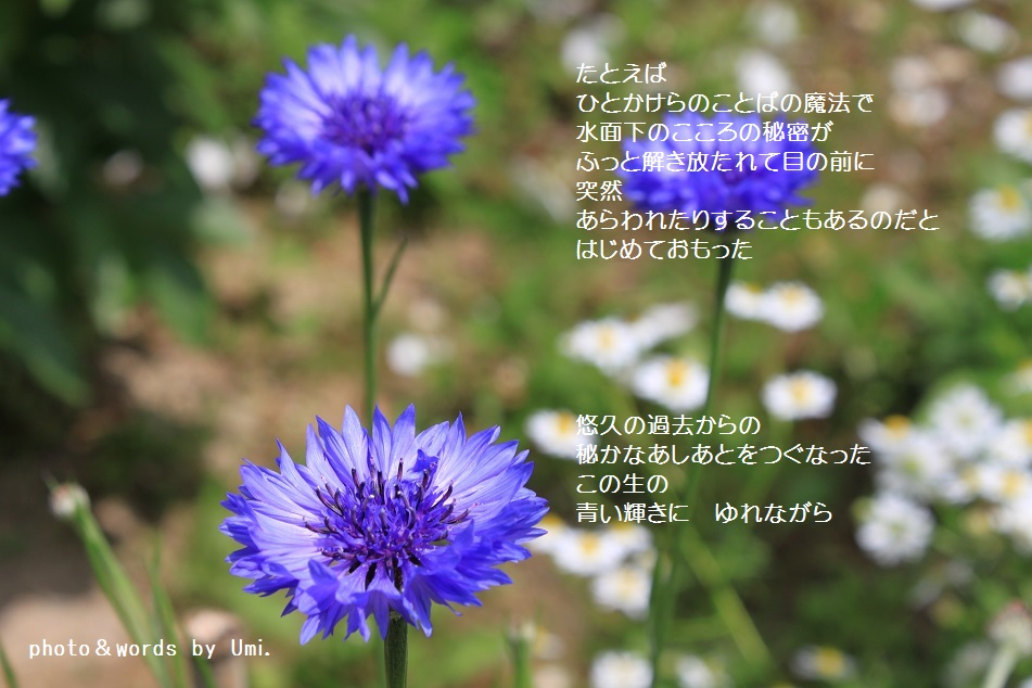 f0351844_07102269.jpg