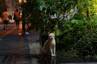 八坂神社のほおづき市_c0193077_2384558.jpg