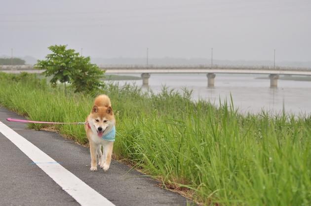 夏休み突入!_a0126590_07300545.jpg