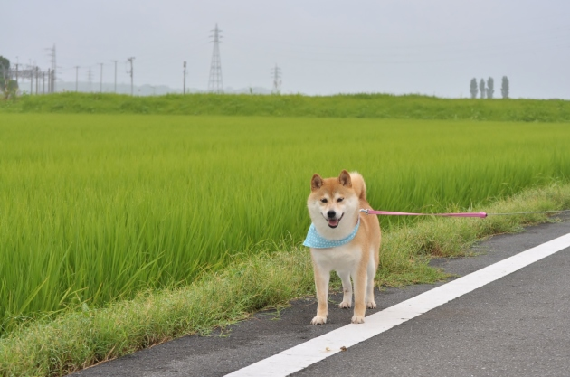 夏休み突入!_a0126590_07320951.jpg