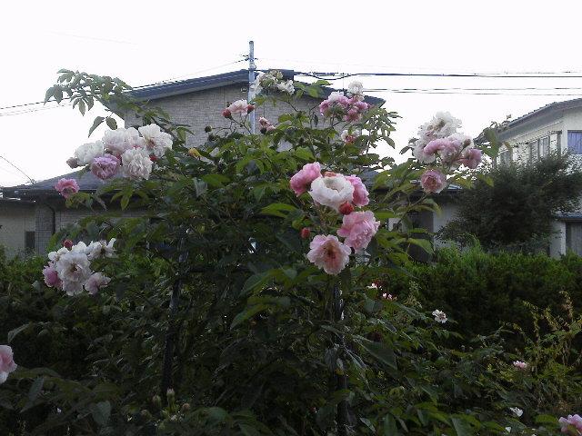 f0157414_22211138.jpg