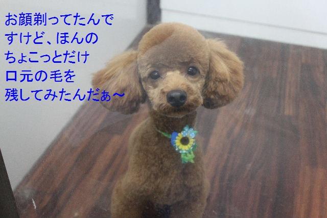お誕生日!!_b0130018_759177.jpg
