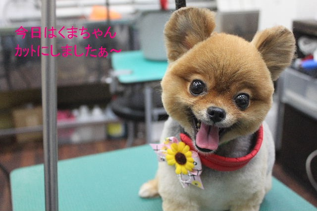 お誕生日!!_b0130018_802791.jpg
